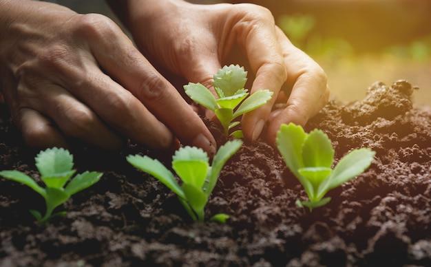 人間の手による苗の概念、植物による土壌中の種子の種子。