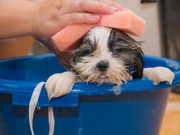 Маленькая собака принимая душ в синем ведре