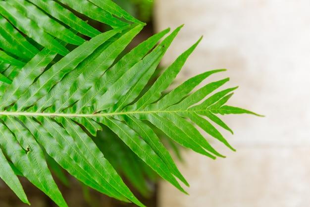 緑のシダの葉の熱帯雨林の植物の背景。