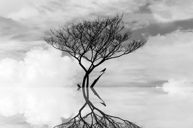 水アートの抽象的な写真で死ぬ木