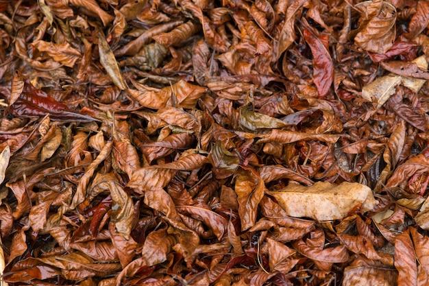 カラフルな秋秋の自然、濡れた森の地面に乾燥葉