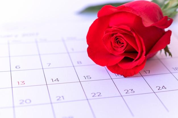 Одиночный цветок розы на странице календаря, валентинка, концепция валентинки,