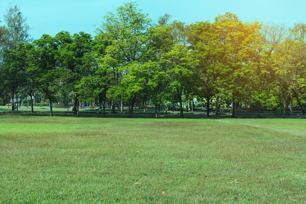 緑の美しい公園