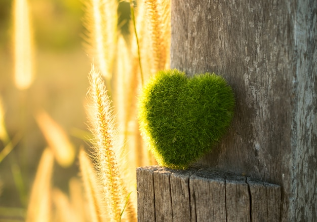 Зеленое сердце на древесине с предпосылкой света захода солнца.