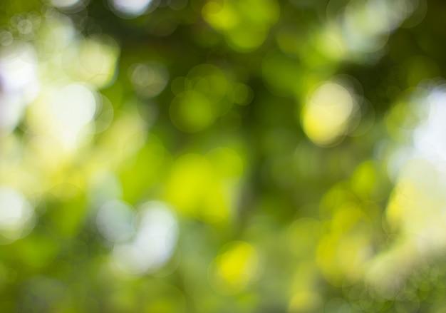 抽象的な自然な緑のボケ、木から緑のボケ