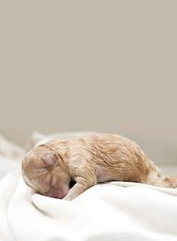 眠っている子犬