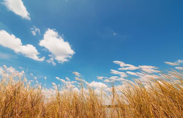 ばねまたは夏の自然の背景に草と青空の後ろに