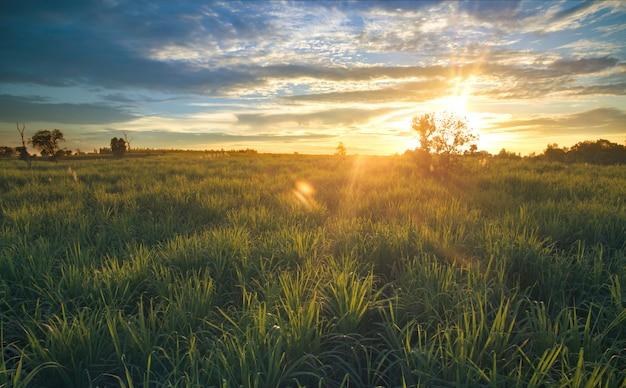 夕焼け空自然風景の背景を持つドローンサトウキビ畑からの眺め。