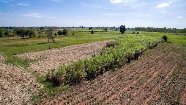 タイの風景の中の無人サトウキビ収穫シーズンからの空撮。