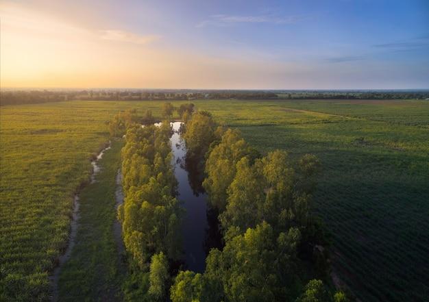 魅力的な池の自然の背景を持つ空撮サトウキビ。