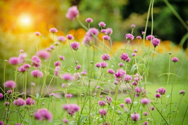 公園でピンクの花のグループのぼやけた光のデザインの背景