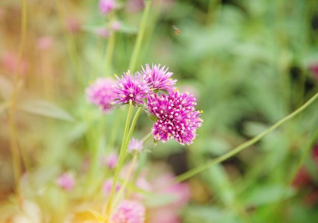 公園のピンクの花のぼやけた光のデザインの背景、自然美