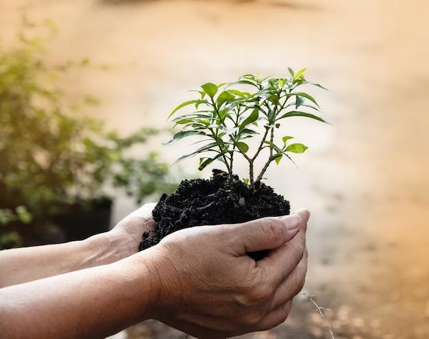 Человеческая рука держит молодое растение