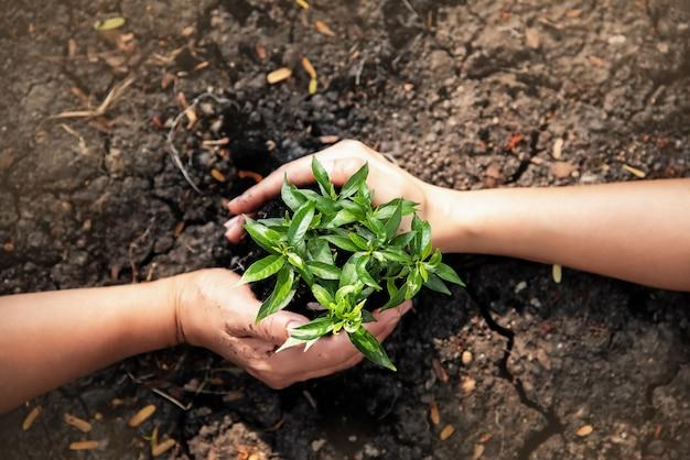 Маленькое дерево и почва были окружены человеческой рукой, вокруг них расплывчатый свет