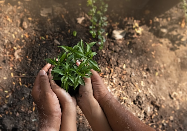 Маленькое дерево и почва были поддержаны рукой человека, вокруг размыто