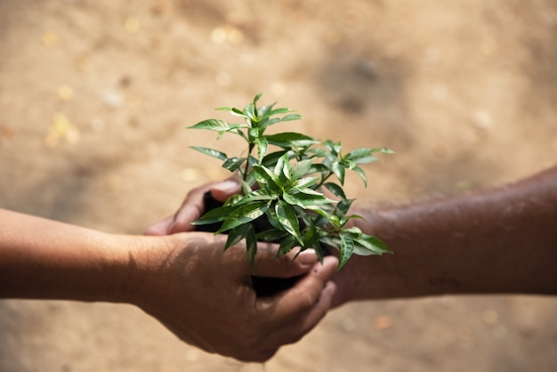 В селективном фокусе маленькое дерево держит за руку