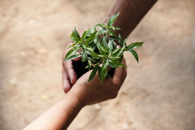 В селективном фокусе маленькое дерево и почва поддерживаются человеческой рукой