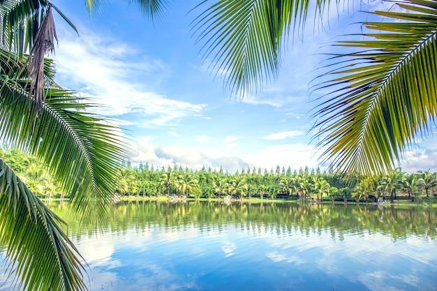 水の反射ココナッツの葉と青空。
