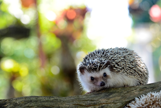 Молодой ежик в естественной среде обитания