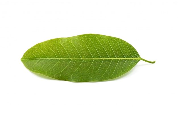 白い背景で隔離の葉