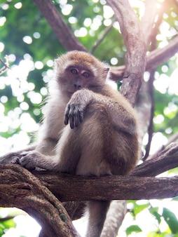 タイの島の森の中の木の猿