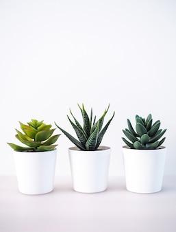 サボテン、白いポットの観葉植物、装飾用の木、家の装飾のクローズアップ。
