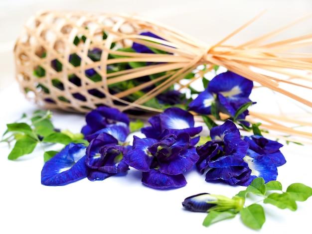 白で隔離される青いエンドウ豆の花または蝶エンドウ豆。