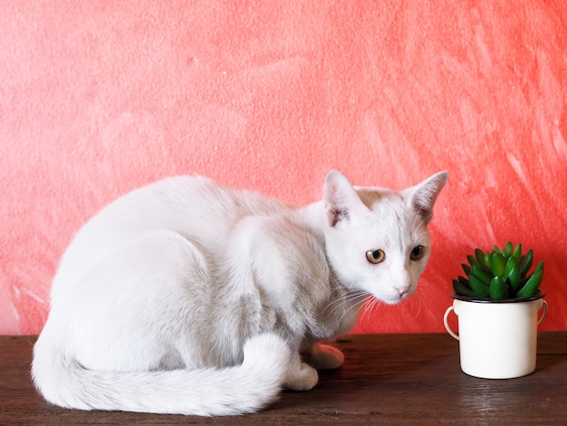 Маленький белый кот лежал плохо на деревянный стол. концепция здравоохранения для больных животных.