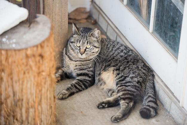 かわいい灰色の猫床に横たわっている。