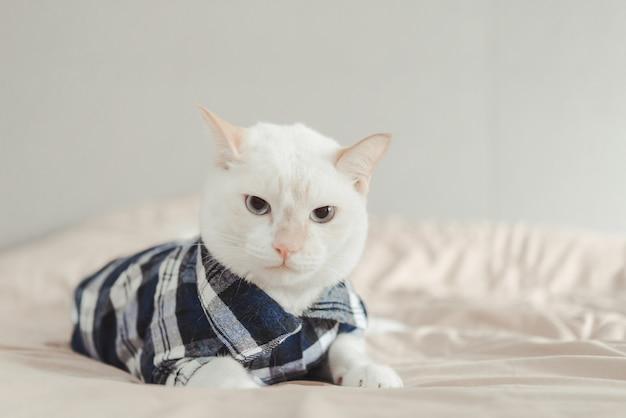 眼鏡をかけている白猫の肖像画