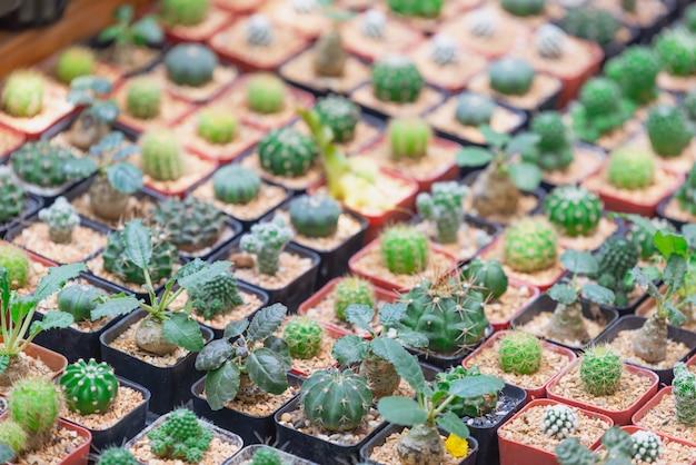 サボテンの植物はパターンを残します。青葉。