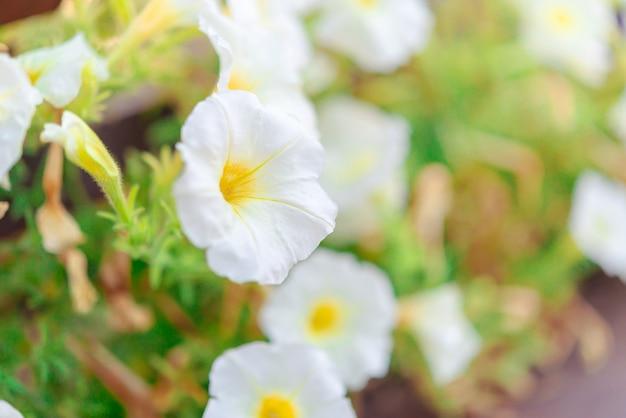 歩道の白い花
