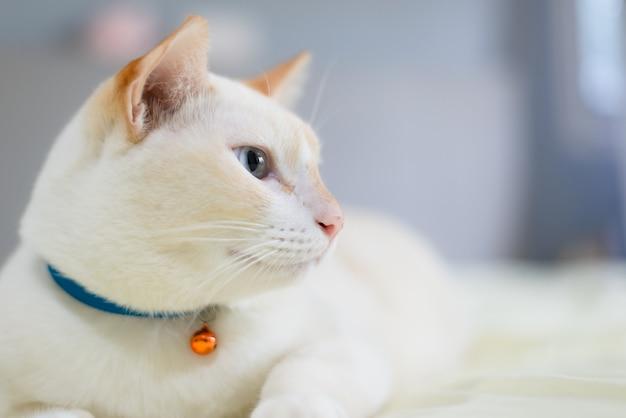 白猫がベッドに横たわって