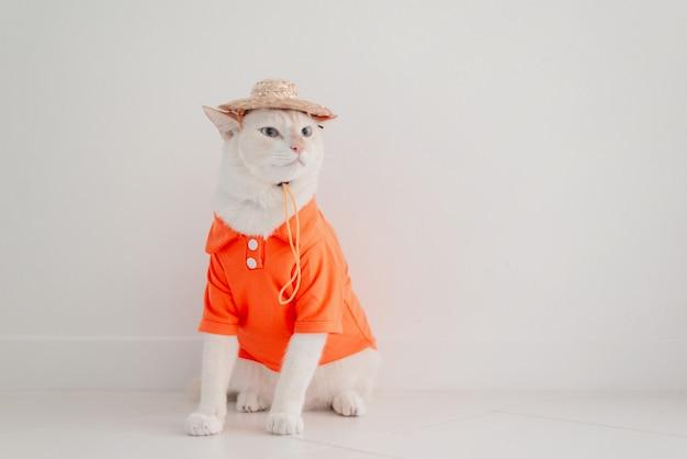Смешная кошка собирается в отпуск, носить пляжную рубашку и шляпу в летней концепции.
