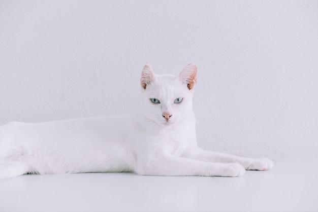 白で家の床に横たわって純粋な白猫の肖像画。
