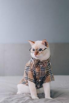 眼鏡、ペットファッション概念を身に着けている白猫の肖像画。ベッドに横になっている白猫。