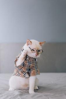 Портрет стекел белого кота нося, концепции моды любимчика. белый кот лежал на кровати.
