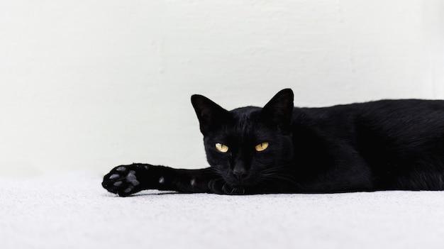 黒い猫は、背景として白い壁で床に横たわっている。