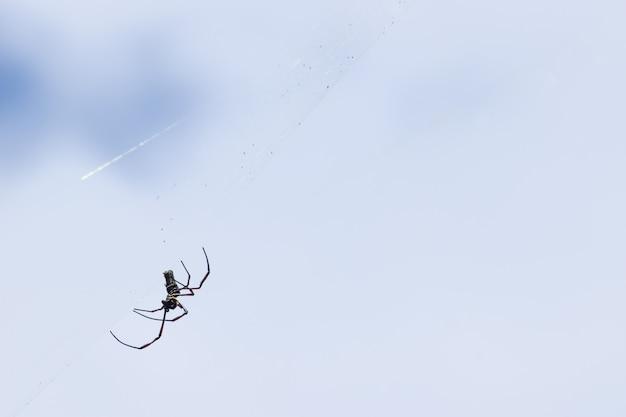 ウェブ上のクモ。クモはクモの巣を回転させます。