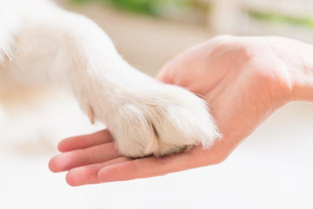 犬の足と人間の手の接触、愛情のしぐさ