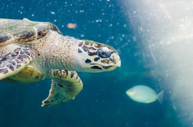 Черепаха купается в море