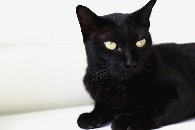 黒い猫が床に敷設します。