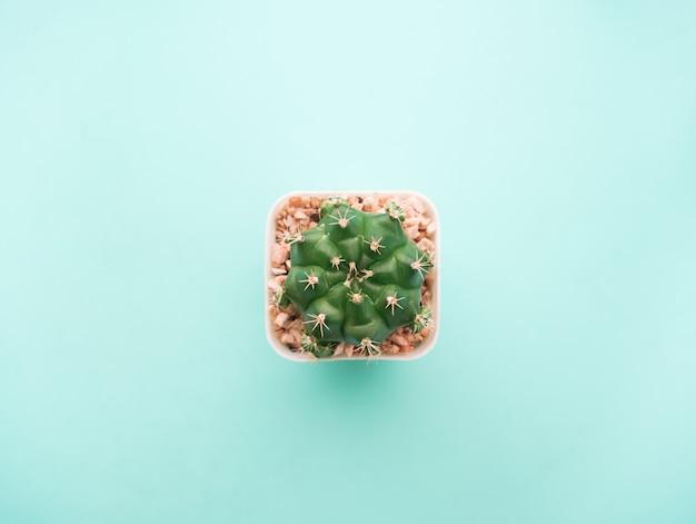 トップビュー小さな緑のサボテンの植物。