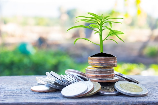 財務計画、マネー成長の概念。