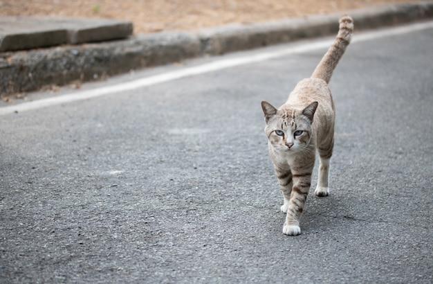 Бродячая кошка гуляет по дороге одна