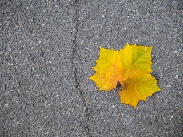 抽象的な絵、カエデの葉黄色地面の上の色。