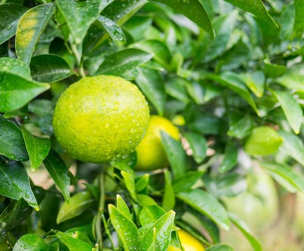 庭の木にオレンジ