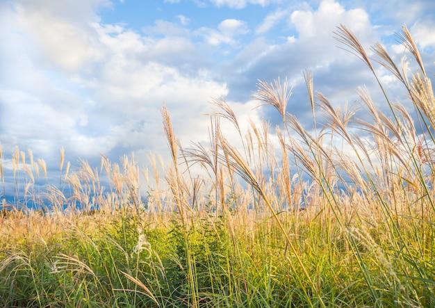 美しい草と青い空