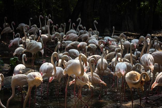 動物園でフラミンゴの群れ