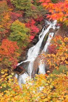 日光日本ではキリフリーの滝や秋が美しい。